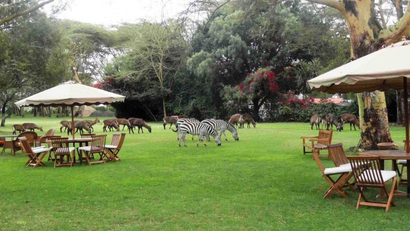 lake-naivasha-country-club-lawn