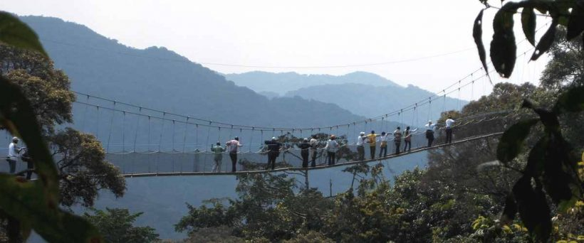 nyungwe-forest-canopy-walkway