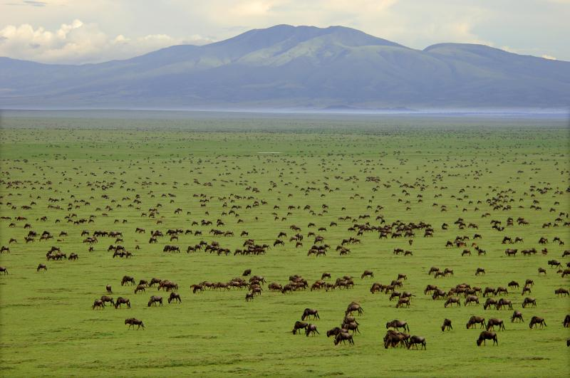 serengeti_view
